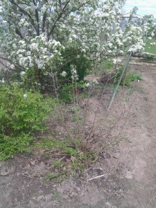 Гуми в саду