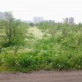 Мичуринский сад